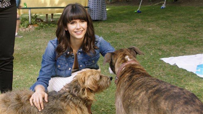 Par amour des chiens Photo 10 - Grande