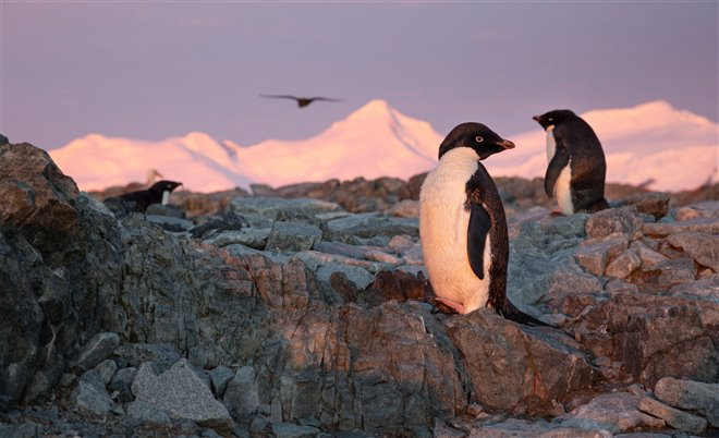 Penguins Photo 10 - Large