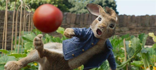 Peter Rabbit Photo 1 - Large