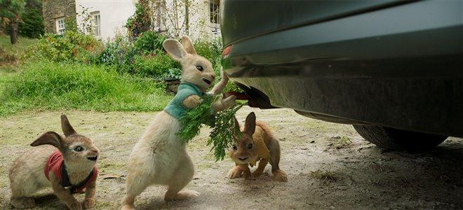 Peter Rabbit Photo 7 - Large
