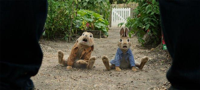 Peter Rabbit Photo 19 - Large