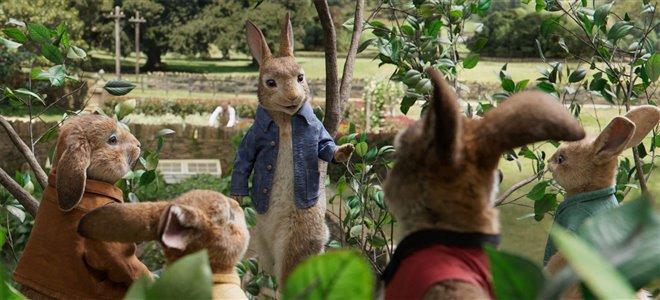 Peter Rabbit Photo 23 - Large