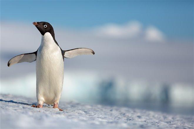 Pingouins Photo 1 - Grande