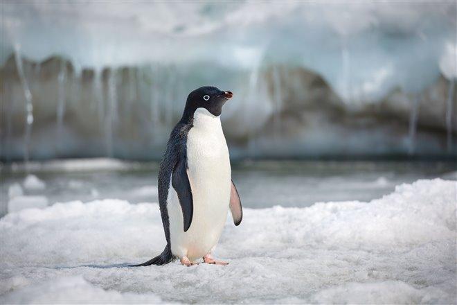 Pingouins Photo 7 - Grande