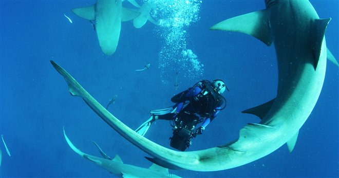 Sharkwater Extinction Photo 3 - Large