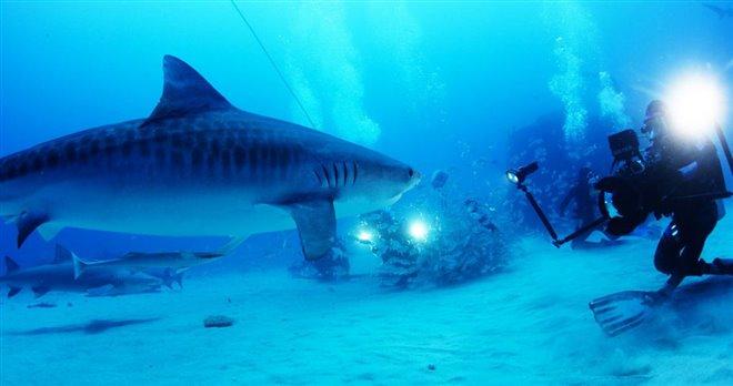 Sharkwater Extinction - Le film Photo 13 - Grande