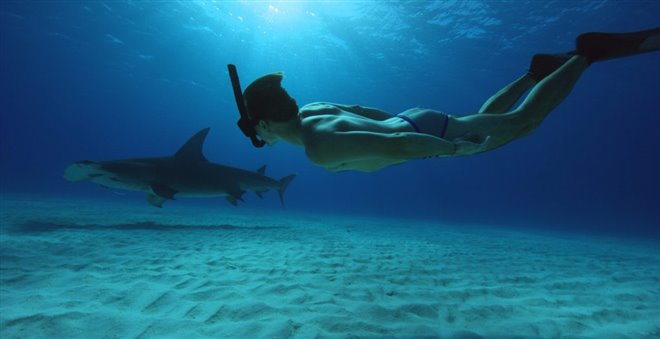 Sharkwater Extinction - Le film Photo 18 - Grande