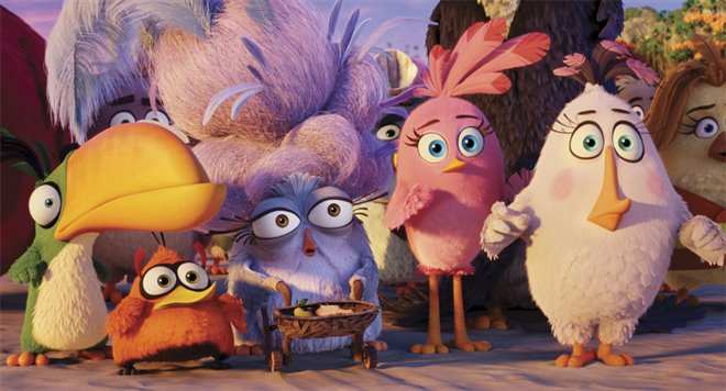 The Angry Birds Movie Photo 21 - Large