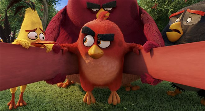 The Angry Birds Movie Photo 33 - Large