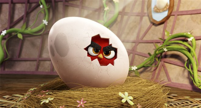The Angry Birds Movie Photo 39 - Large