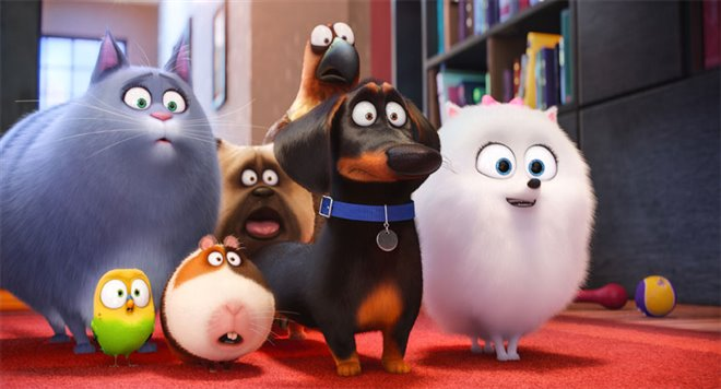 The Secret Life of Pets Photo 10 - Large