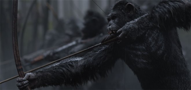 War for the Planet of the Apes Photo 4 - Large