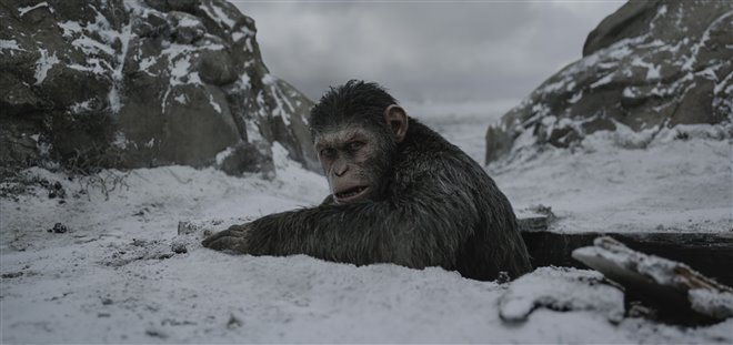 War for the Planet of the Apes Photo 7 - Large