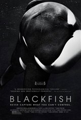 Blackfish Movie Poster Movie Poster