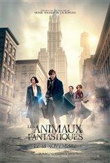 Les animaux fantastiques Affiche de film