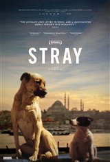 Stray : Le monde des chiens errants (v.o.s.t-f.) Affiche de film