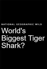 World's Biggest Tiger Shark? Affiche de film