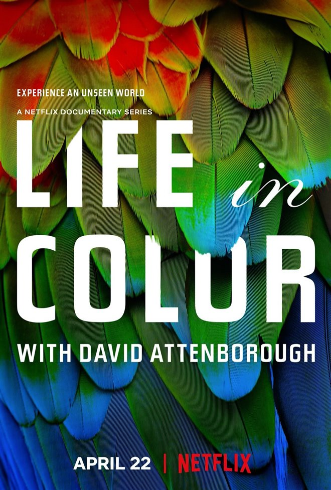 Life in Color with David Attenborough (Netflix) Large Poster