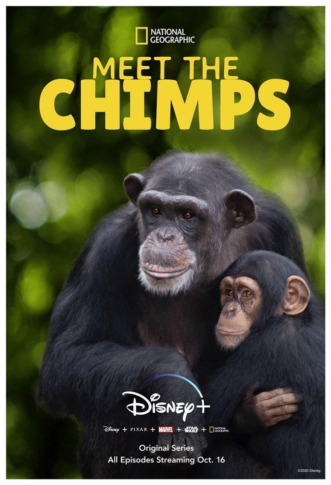 Meet the Chimps (Disney+) Large Poster