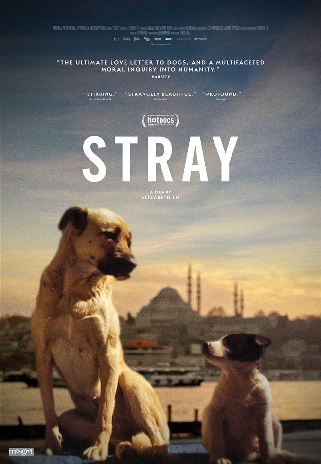 Stray Large Poster