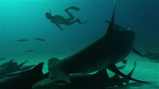 Sharkwater: Extinction Thumbnail