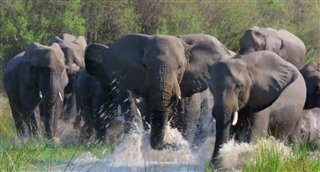 Elephant (Disney+) Movie Trailer