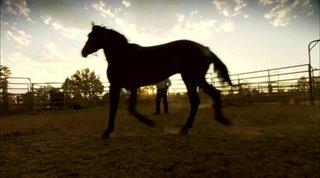 Wild Horse, Wild Ride Thumbnail