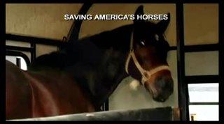 Saving America's Horses: A Nation Betrayed Thumbnail
