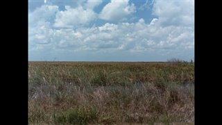 River of Grass Thumbnail