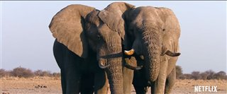 The Ivory Game (Netflix) Thumbnail