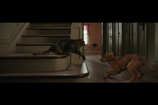 """A Dog's Purpose Movie Clip - """"Bailey Learns His Place"""" Video Thumbnail"""