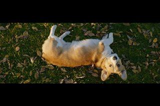 a-dogs-purpose-movie-clip---maya-gets-tino-to-chase-ball Video Thumbnail