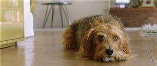 dog-days-teaser-trailer Video Thumbnail