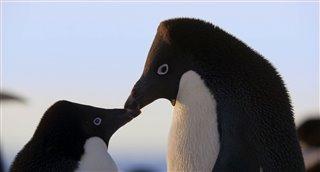 penguins-movie-clip---meet-adeline Video Thumbnail