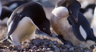 penguins-movie-clip---sharing-duties Video Thumbnail