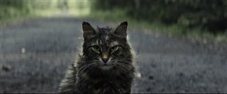 'Pet Sematary' Trailer Video Thumbnail