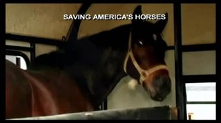 saving-americas-horses-a-nation-betrayed Video Thumbnail