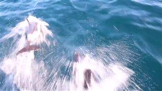 sea-of-life- Video Thumbnail