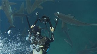 sharkwater-extinction-cast-interviews Video Thumbnail