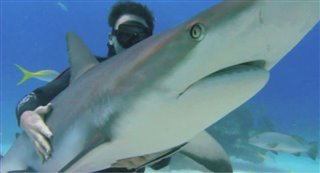 sharkwater-official-trailer Video Thumbnail